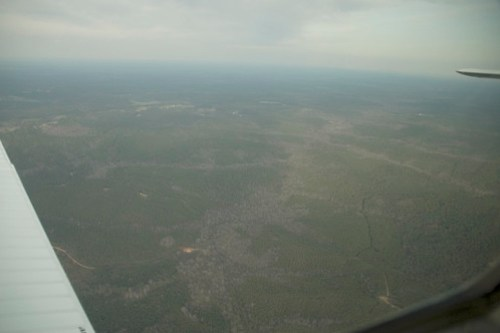 Forested land
