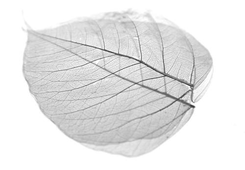 Leaf 40/365