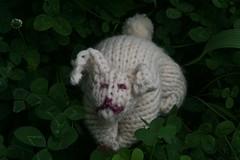 2008-07-10-FO-bunny1