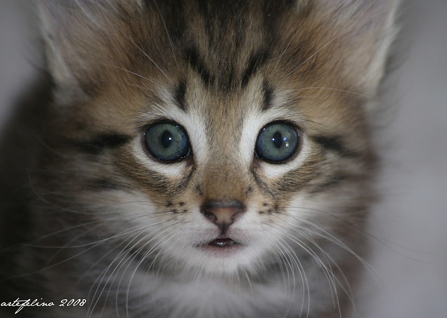 ¡Qué ojos!