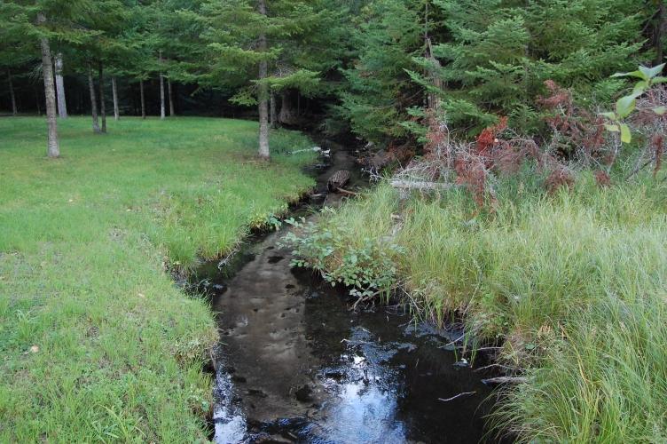 Cabin-side creek