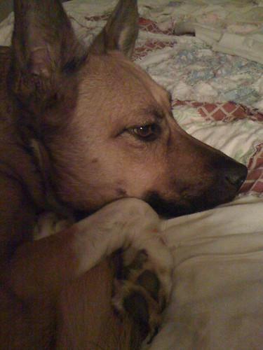 Contemplative Sadie