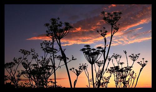 sunsetfm3
