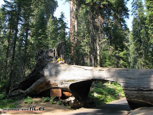 Parque Nacional Sequoia y Kings Canyon gua y turismo  USA rIL