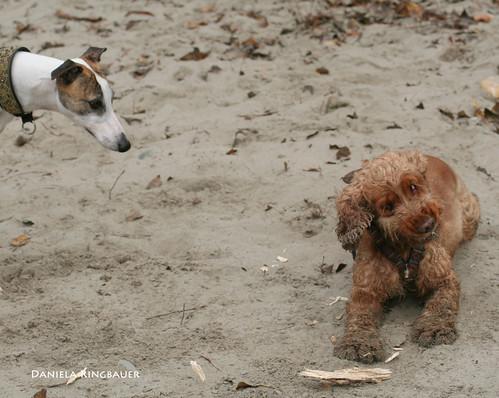 Spaziergang mit Bella, Jessy & Joey