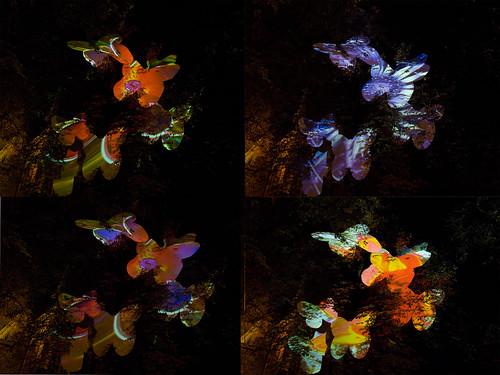 Papillon-Butterfly-Schmetterling-Paiperleck