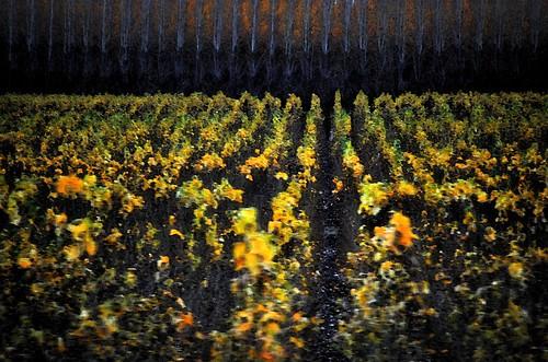 tree rows water color