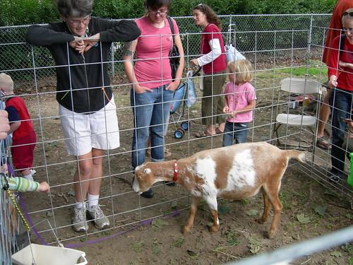 Friendly Goat