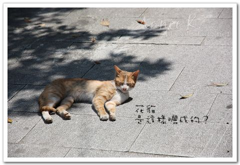 平溪線貓4