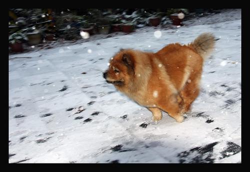 My snow angel...Meg enjoying a rare snow day