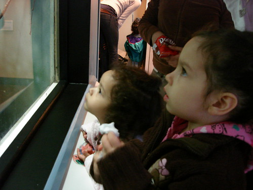 In awe over the monkeys