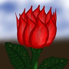 rose-011