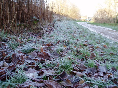 this is part of the path where i walk Jess regularly... you can see how frosted everything is