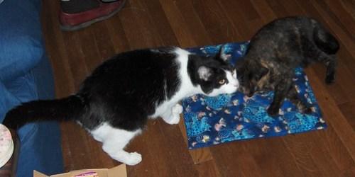Catnip Mat from Tania
