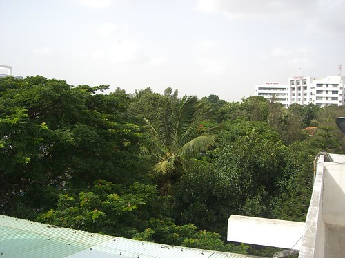 View from the office's terrace