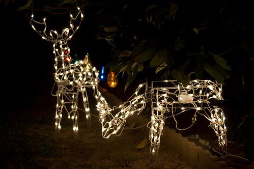 animatronic reindeer already??? (by bookgrl)