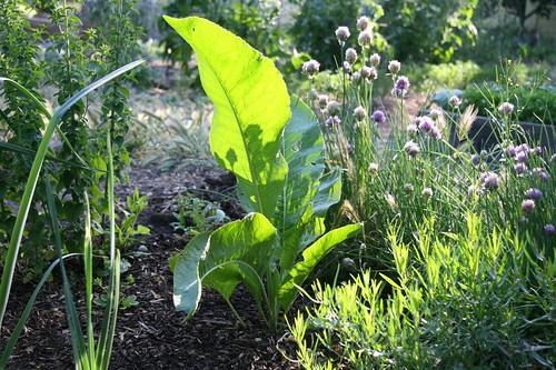 horseradish and herbs