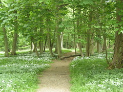 Spring woodland at the Ashridge Estate