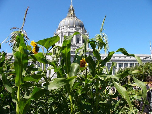 City Hall Victory Garden