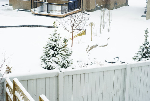 back neighbors tree