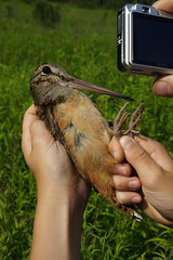 Bird Paparazzi