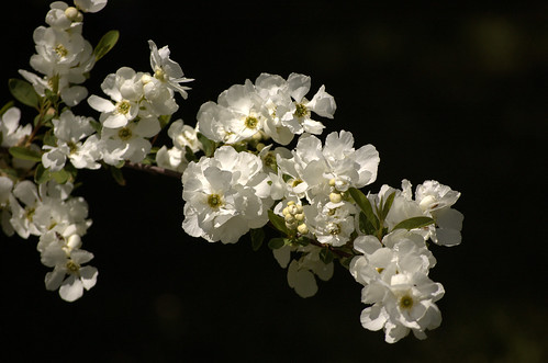 White on Black flowers