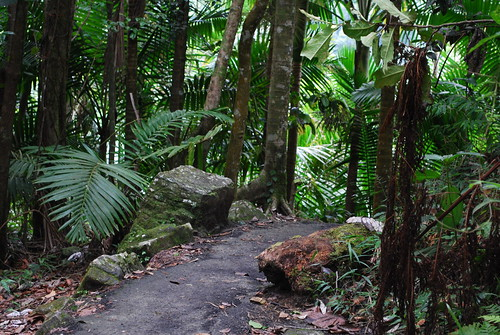 Paved trail in El Yunque