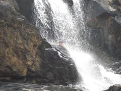 Sharavathy Valley 155
