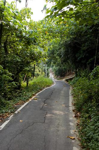 Bike Path 5
