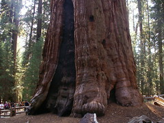 General Sherman Tree - la base