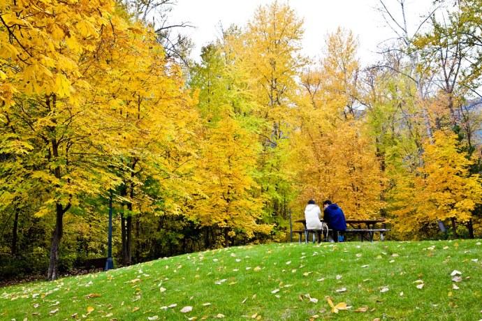 Fall Surrounds (by Phanix)