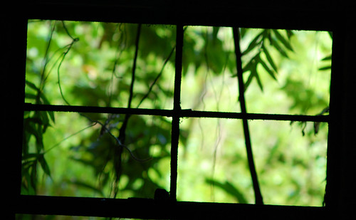 Jungle surrounds
