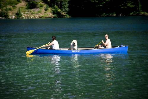 clipper canoe dog