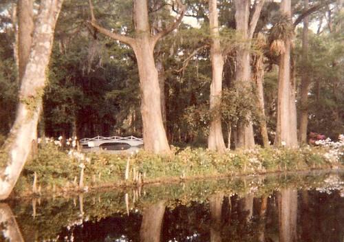 Bridge at Magnolia Plantation in Charleston
