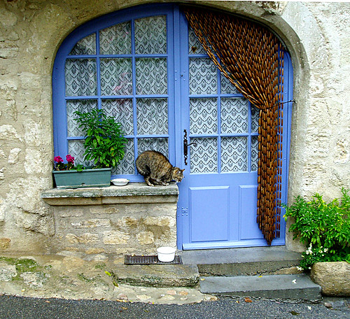 Cat in Cucuron