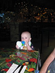Fun at the Rainforest Cafe