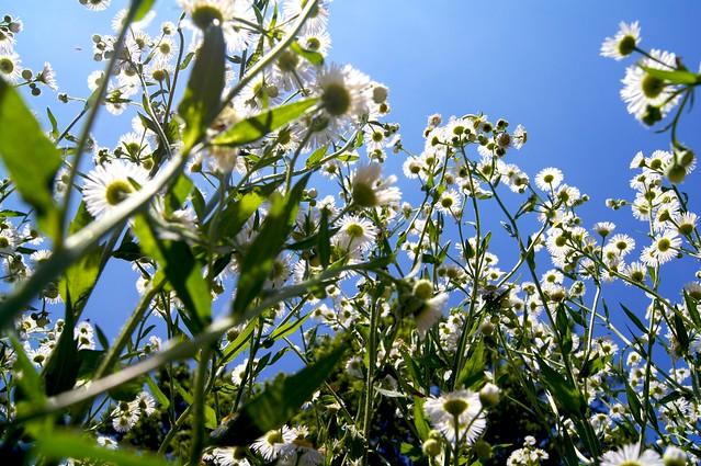 A Flower's POV