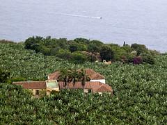 Plataneras de Tenerife