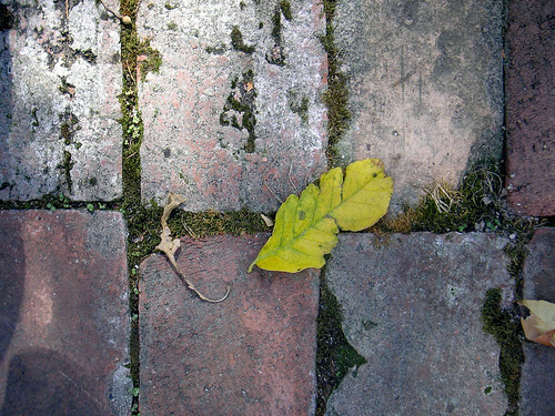 photo, leaf on bricks