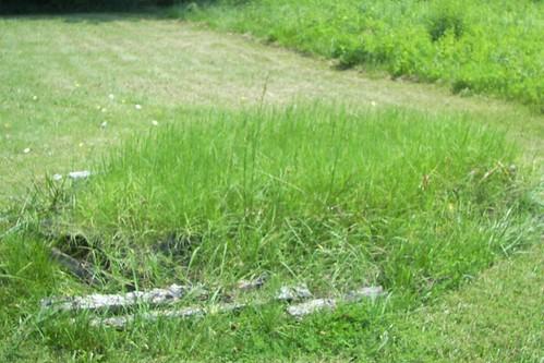 raisedbedgraveyard