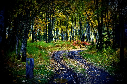 The Road Less Traveled--fall version