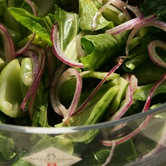 Pak Choy Salat