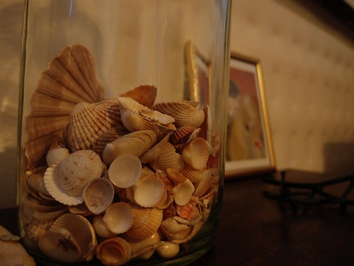 Seashells on my table