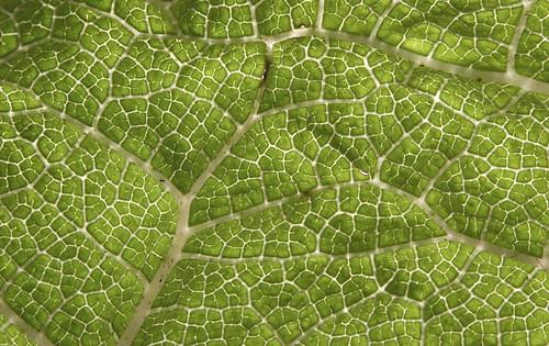 under a leaf