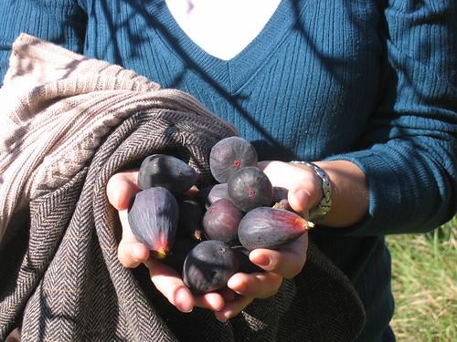 Fresh Spanish figs