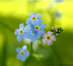 O)) by law_keven @ Flickr