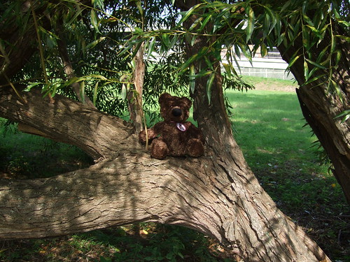 Bruno in tree