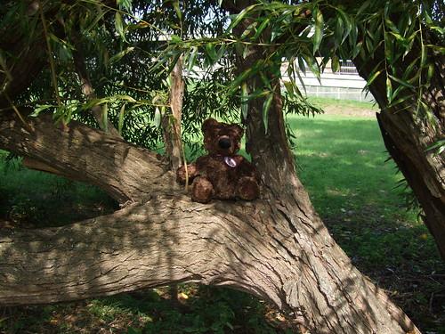 Bruno in tree