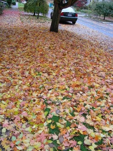 Leaf carpet