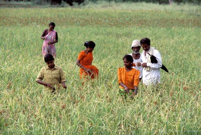 Rural family in their field harvesting crop. India - Photo: World Bank